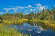 Wetland on North Star Road<br />Flin Flon<br />Manitoba<br />Canada