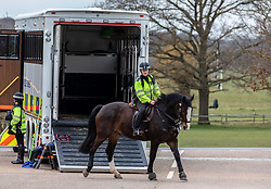 © Licensed to London News Pictures. 01/04/2020. London, UK. A huge police horse box parks in a car park in Richmond Park as mounted police patrol the park in South West London to keep a firm check on social distancing rules as the Coronavirus crisis continues. Photo credit: Alex Lentati/LNP