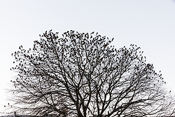 Birds on trees in Deep Ellum, Dallas, Texas, USA.