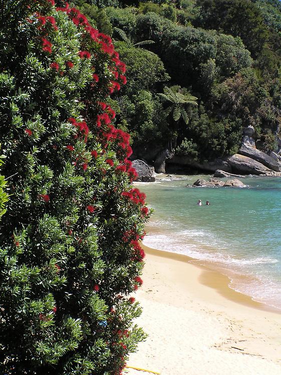 OLYMPUS DIGITAL CAMERA Golden sand beach a few minutes west of Kaiteriteri beach,Tasman Nelson
