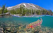 Golden Trout, Underwater