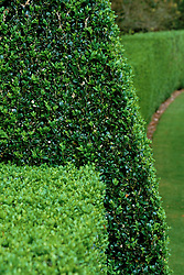 Clipped box hedging at Hinton Ampner, Hampshire. Buxus sempervirens