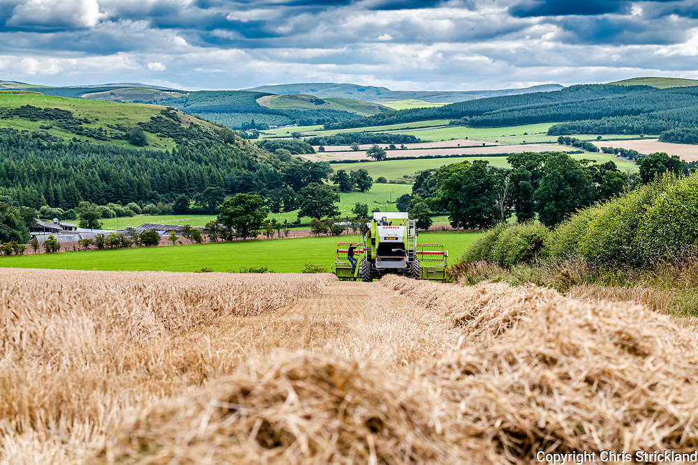 Oxnam, Jedburgh, Scottish Borders, Scotland, UK. 30th August 2020. A combine harvester at work during the summer of 2020, which was one of the worst British harvests in decades.