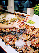 Large shrimp at a seafood restuarant