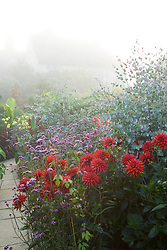 Foggy morning in the exotic garden at Great Dixter. Dahlia 'Witteman's Superba' and Verbena bonariensis in the foreground