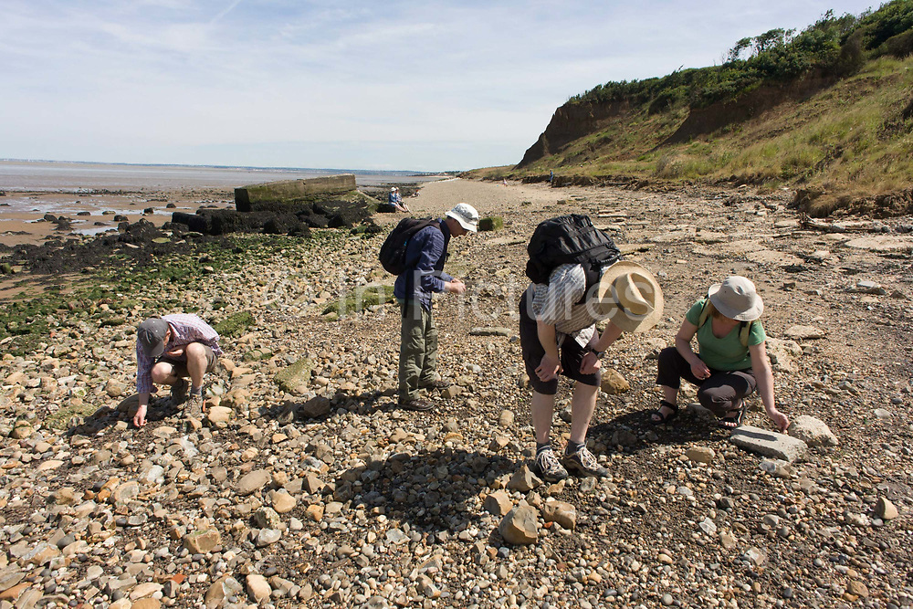 Fossil hunters bend down looking among Eocene rocks and stone at Warden Point, Isle of Sheppey, Kent, England. Examining the stony ground, the amateur palaeonotologists search for tyhe remains of sea creatures from a bygone era. Warden Point, a pinnacle of eroding land and muddy foreshore. The area encompasses around a million years of sedimentation, dating from the early Eocene epoch of the Palaeogene period, 52-51 million years ago. At this time southern England was located approximately 40°N of the equator, 10°S of its present latitude, comparable to Spain today.
