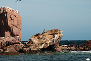 View of Los Islotes and California Sea Lions, north of Isla Partida, La Paz, BCS, Mexico; Jan 2010