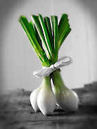 Bunch of Fresh spring onions