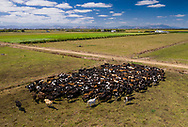 Pouarua Farms, Thames.<br /> <br /> Ahuwhenua Trophy Excellence in Māori Farming Award 2021 for Dairy. February 2021. Photo by alphapix.nz<br /> <br /> CONDITIONS of USE:<br /> <br /> FREE for editorial use in direct relation the Ahuwhenua Trophy competition. ie. not to be used for general stories about the finalist or farming.<br /> <br /> NO archiving of images. NO commercial use. <br /> Please contact John@alphapix.co.nz if you have any questions