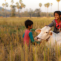Children playing in the field in Cambodia