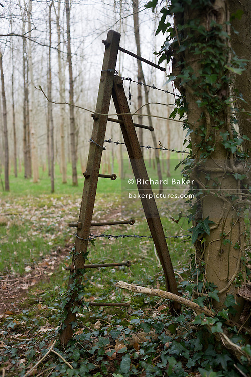 Old steel woodland boundary fencing with barbed wire and forest landscape.