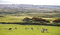 PORTRUSH - Hole 3. ROYAL PORTRUSH GOLF CLUB. The Dunluce Championship Course.COPYRIGHT KOEN SUYK