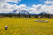 """Bracewells Alpine Wilderness Adventures located in the Chilcotin Districtof British Columbia. """"The Chilcotin"""" is a plateau and mountain region in British Columbia on the inland lea of the Coast Mountains on the west side of the Fraser River."""