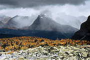 """A fall storm threatens rain over larch forest, in Yoho National Park, British Columbia, Canada. This is part of the Canadian Rocky Mountain Parks World Heritage Site declared by UNESCO in 1984. Published in """"Light Travel: Photography on the Go"""" book by Tom Dempsey 2009, 2010."""