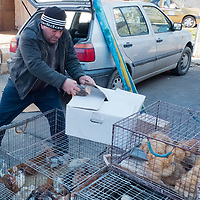 TIMISOARA, ROMANIA - APRIL 21:  A market seller fills a box with  live chickens for a customer at a daily market on April 21, 2013 in Timisoara, Romania.  Romania has abandoned a target deadline of 2015 to switch to the single European currency and will now submit to the European Commission a programme on progress towards the adoption of the Euro, which for the first time will not have a target date. (Photo by Marco Secchi/Getty Images)