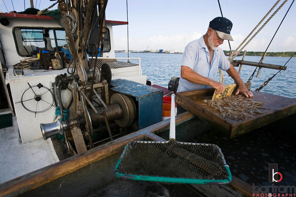 KEVIN BARTRAM/The Daily News.Jerome Kunz sorts his catch aboard his shrimp boat St. Vincent as he works in the Galveston Ship Channel on Wednesday, July 12, 2006. Kunz has spent most of his life shrimping in the waters around Galveston.