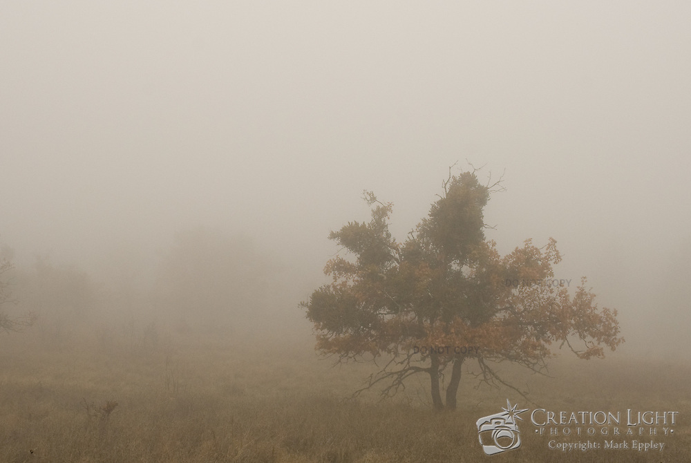 In the fall and winter it is often foggy in Medford Oregon.