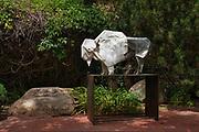 """Tatanka Ska"" in the garden at Kay Contemporary Art in Santa Fe."