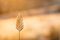 Fall grasses on a frosty Calgary morning<br /> <br /> ©2016, Sean Phillips<br /> http://www.RiverwoodPhotography.com