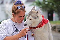 Siberian Husky Eating Doggie Ice Cream