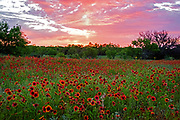 Texas Hill Country Sunrise, double spread in Wildflower Magazine spring 2019, Austin, Texas
