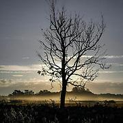 Ensamt träd en tidig morgon i Fide.<br /> PHOTO © Bernt Lindgren