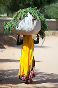 Indian woman villager working at farm smallholding carrying animal feed at Sawai Madhopur near Ranthambore in Rajasthan, India
