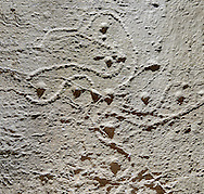Cast of a prehistoric Petroglyph, rock carving, of a rose of camina in a swastika shape carved by the Camunni people in the iron age between 1000-1600 BC , Caprene rock 2-3, Seradina-Bedolina Archaeological Park Museum, Valle Comenica, Lombardy, Italy .<br /> <br /> Visit our PREHISTORY PHOTO COLLECTIONS for more   photos  to download or buy as prints https://funkystock.photoshelter.com/gallery-collection/Prehistoric-Neolithic-Sites-Art-Artefacts-Pictures-Photos/C0000tfxw63zrUT4<br /> If you prefer to buy from our ALAMY PHOTO LIBRARY  Collection visit : https://www.alamy.com/portfolio/paul-williams-funkystock/valcamonica-rock-art.html