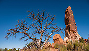 Dark Angel is a red sandstone pinnacle on Devils Garden Trail, Arches National Park, Moab, Utah, USA. This image was stitched from multiple overlapping photos. A thick underground salt bed underlies the creation of the park's many arches, spires, balanced rocks, sandstone fins, and eroded monoliths. Some 300 million years ago, a sea flowed into the area and eventually evaporated to create the salt bed up to thousands of feet thick. Over millions of years, the salt bed was covered with debris eroded from the Uncompahgre Uplift to the northeast. During the Early Jurassic (about 210 million years ago) desert conditions deposited the vast Navajo Sandstone. On top of that, about 140 million years ago, the Entrada Sandstone was deposited from stream and windblown sediments. Later, over 5000 feet (1500 m) of younger sediments were deposited and then mostly worn away, leaving the park's arches eroded mostly within the Entrada formation.