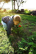 A two year old toddler in a field of spring flowers
