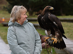 Cabinet Secretary for the Environment, Climate Change & Land Reform Roseanna Cunningham met up with an 8 month old Golden Eagle to launch the South of Scotland Golden Eagle Project, where the plan is to introduce chicks into the wild starting from next year.<br /> <br /> © Dave Johnston/ EEm