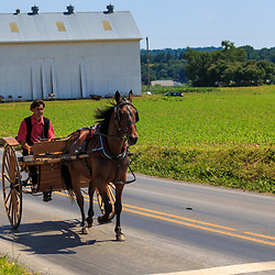 Strasburg, PA - June 19, 2016: An Amish youth using a two wheel wagon on a county road in Lancaster County, PA.