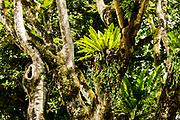 Rainforest, on the Seychelles island