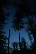 Night falls in the Sonian Forest, on the edge of Brussels. The forest is the green lung of the traffic-choked Belgian city.
