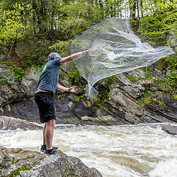 A scientist from the Gulf of Maine Research Institute attempts to catch alewives during their spring spawning run on the Presumpscot River in Portland, Maine.