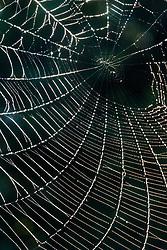 Spider web, Trinity River Audubon Center, Dallas, Texas, USA.