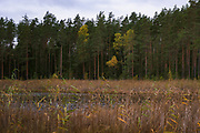 Wetlands and raised bogs in various seasons, Latvia Ⓒ Davis Ulands | davisulands.com