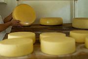Medeiros_MG, Brasil...Producao de queijo em Medeiros, Minas Gerais...Cheese production in Medeiros, Minas Gerais...Foto: JOAO MARCOS ROSA / NITRO