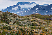 From Mount Stroller White above the Mendenhall Glacier, Tongass National Forest, Alaska