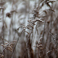 USA, Illinois, Darien. Winter snow and prairie grass in Oldfield Oaks Forest Preserve.