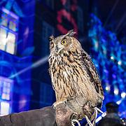 NLD/Den Bosch/20161201 - Koningin Maxima opent Jheronimus Academy of Data Science, uil soort Oehoe