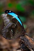 Sao Roque de Minas_MG, Brasil...Parque Nacional da Serra da Canastra em Sao Roque de Minas, Minas Gerais. Na foto detalhe de uma borboleta...Serra da Canastra National Park in Sao Roque de Minas, Minas Gerais. In this photo a butterfly...Foto: JOAO MARCOS ROSA / NITRO..