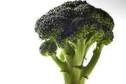 Broccoli gezonde groente  - Broccoli healthy vegetable