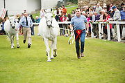 Malachi Gorham from Clifden  at the 93rd annual Connemara Pony show in Clifden Co. Galway  Photo:Andrew Downes, XPOSURE