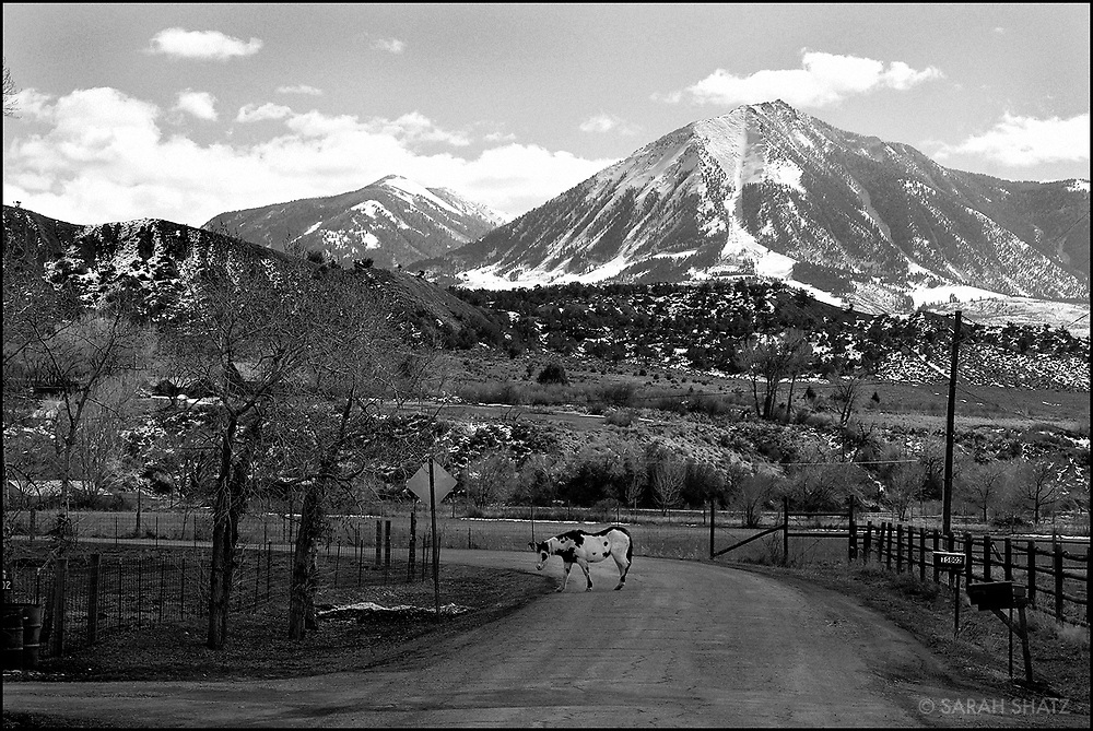 Horse on the side of the road in Paonia, Colorado