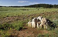 Petrified Sequoia stump, Sequoia affins, Florissant Fossil Beds National Monument, Colorado.