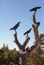 crow sculpture in New Mexico