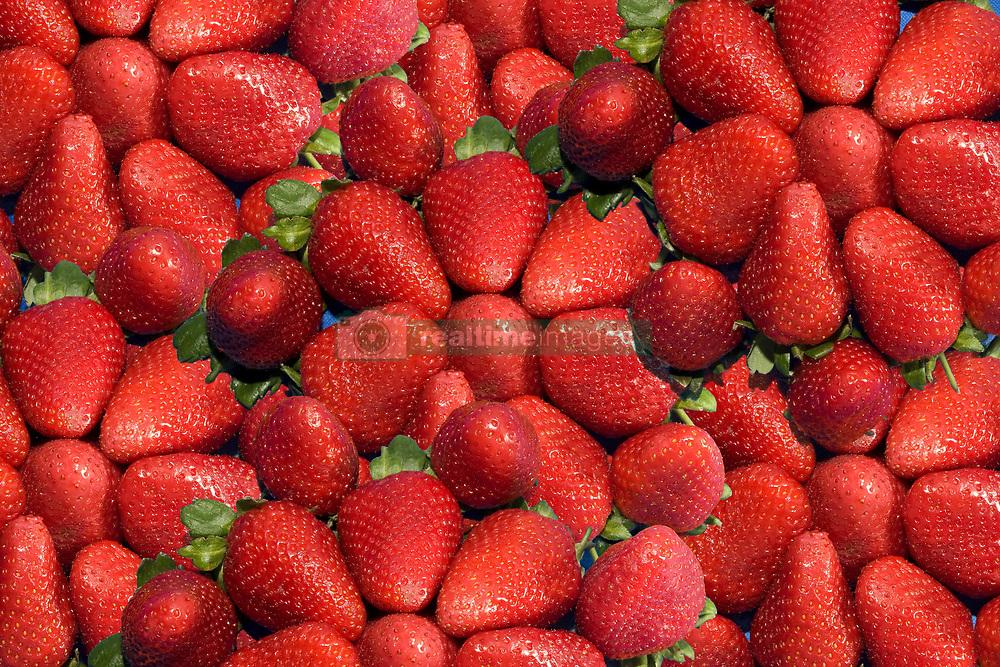 July 21, 2019 - Strawberries (Credit Image: © John Short/Design Pics via ZUMA Wire)