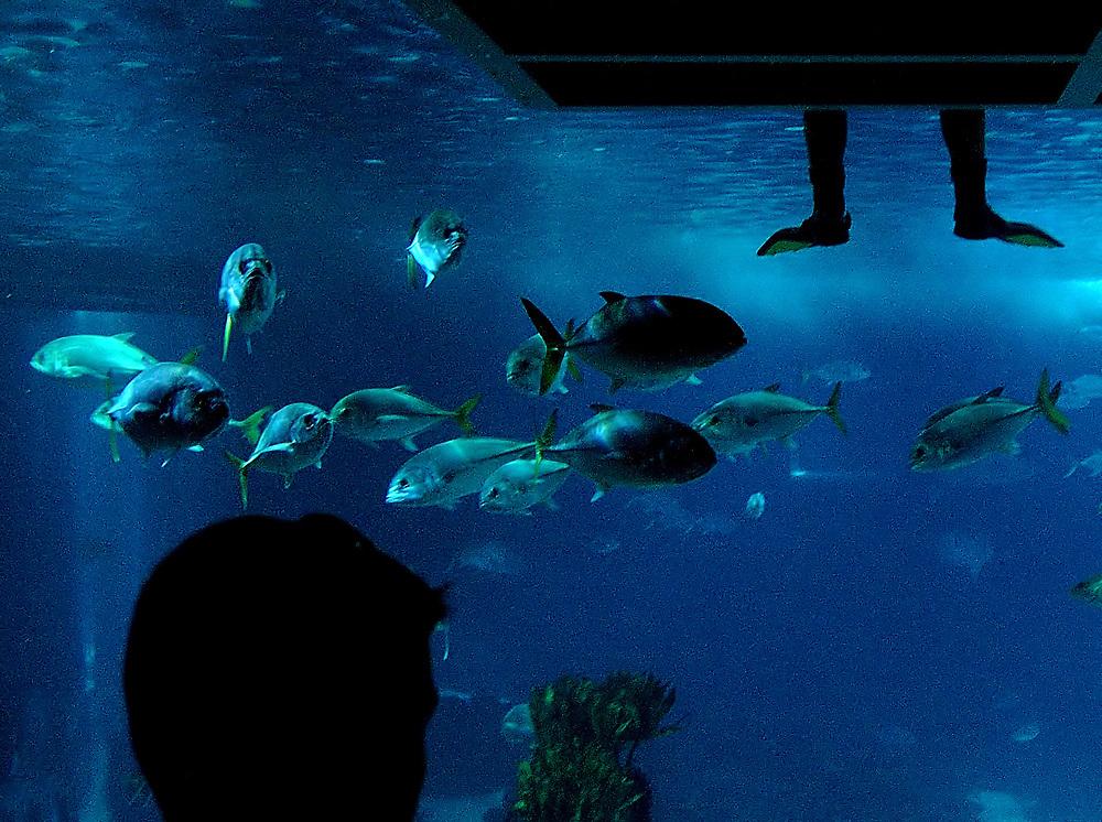 Aquarium<br /> Lisbon, August 2005<br /> <br /> Photo Antonietta Baldassarre