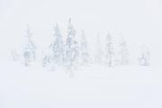 Snowy forest tundra spruce in thick mist of cloud, Saariselkä, Finland Ⓒ Davis Ulands | davisulands.com